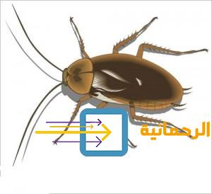 مكافحة الحشرات ورش الصراصير 0500893351