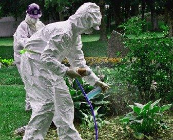 درب الرحمانية وافضل خدمة رش المبيدات الحشرية